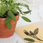 herbs growing in pot