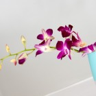 dark red orchids on blue vase
