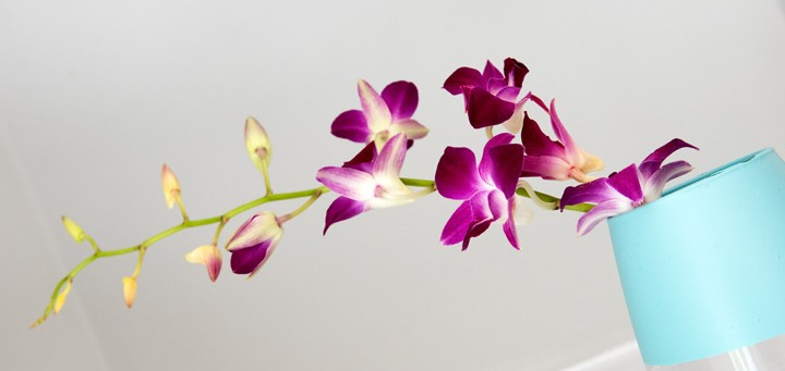 Orchid Obsession T8n