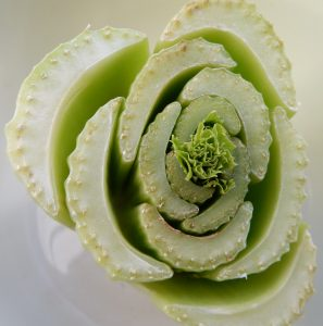 """Celery"""